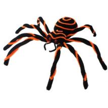 Fekete-narancs pók
