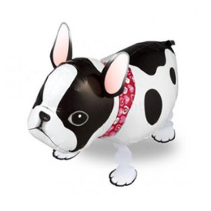 Sétáló francia bulldog fólia lufi